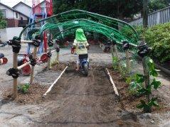 【はやみや】緑のトンネルを作りました!