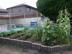 【はやみや】夏の園庭